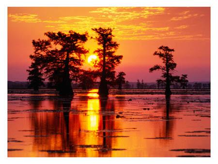 cypress-swamp-sunrise-11